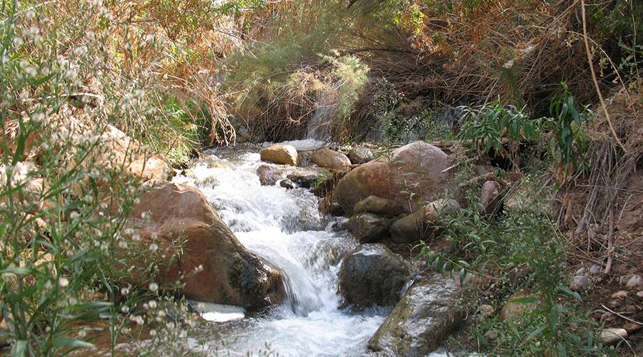 Rambling Brook at Grand Canyon Diamond Creek