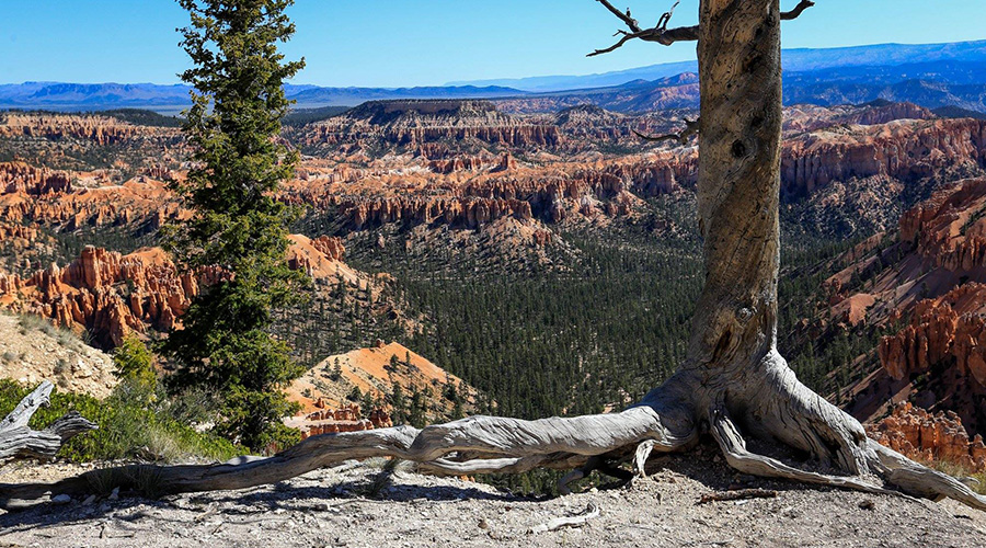 Bryce Canyon Mountain Views